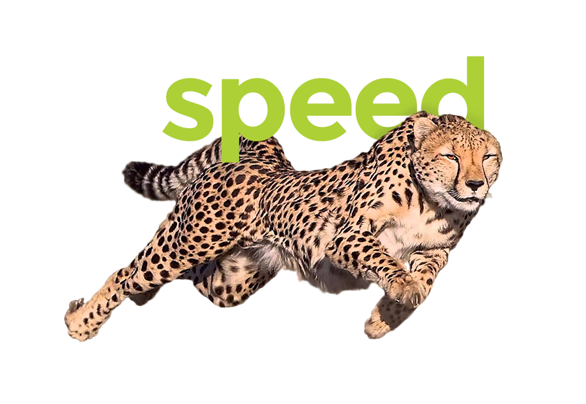 Speedy Cheertah